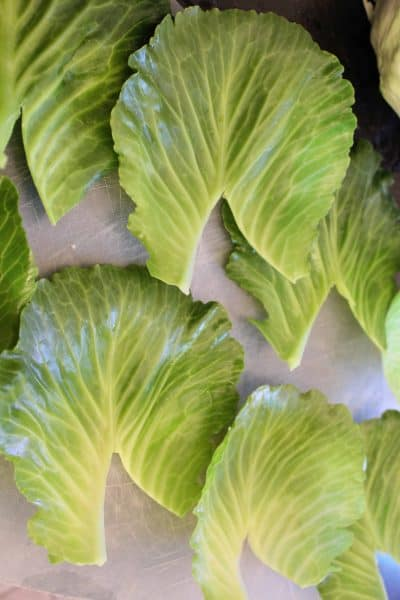 Prepped Cabbage Leaves