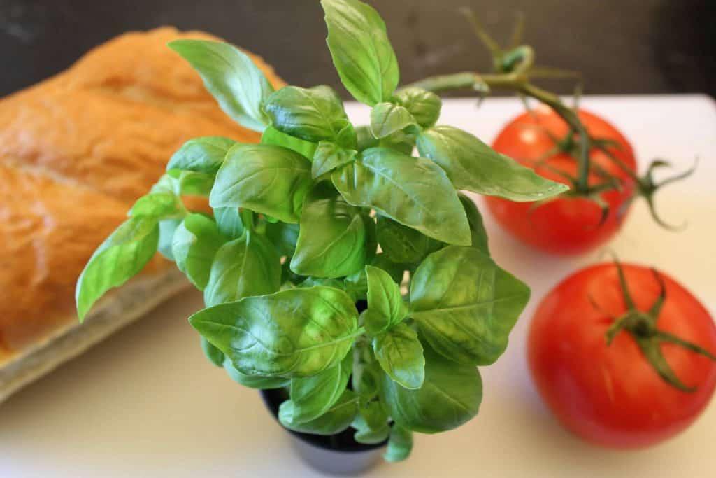 Fresh basil is a primary ingredient in Caprese Salad